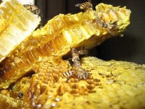 Honey_3